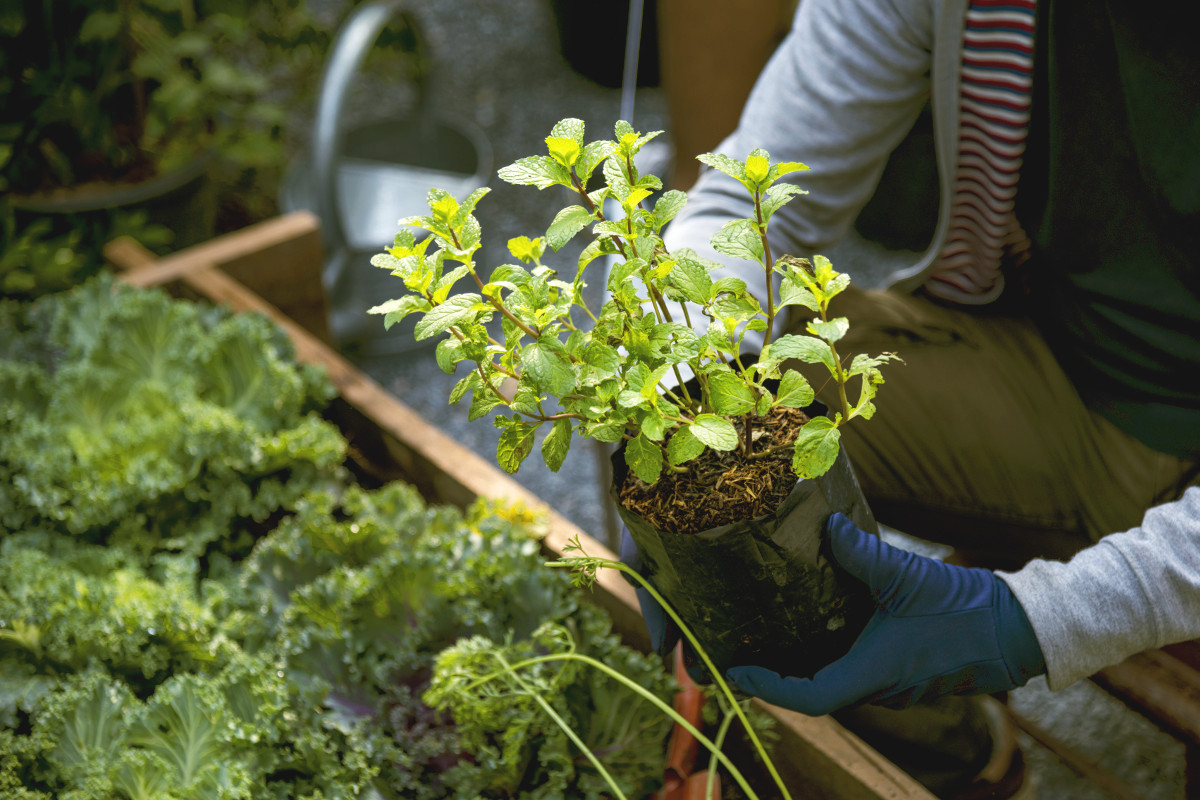 7 Edible Plants To Grow On Your Balcony Boutique Property Agents
